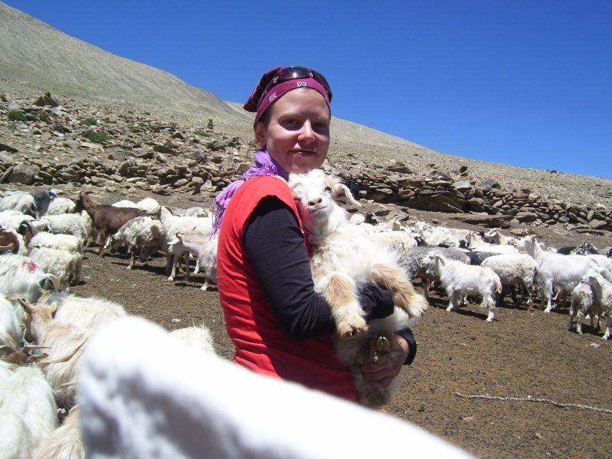 Darováním kozy přispějete chudým Tibeťanům k udržení jejich nomádských tradic