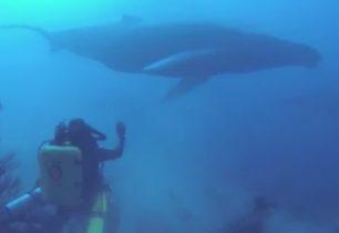 Potápění s nějvětšími živočichy Země + VIDEO